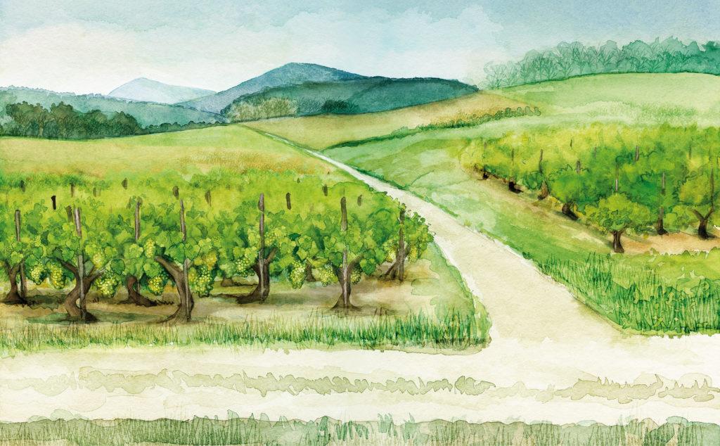 Aquarelle, illustration, Jura, vignes